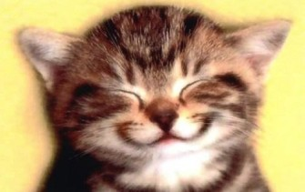 smiling-kitty